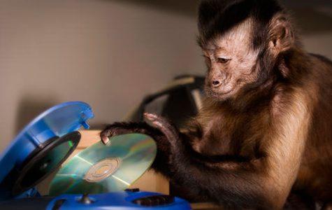 Helping Hand Monkeys