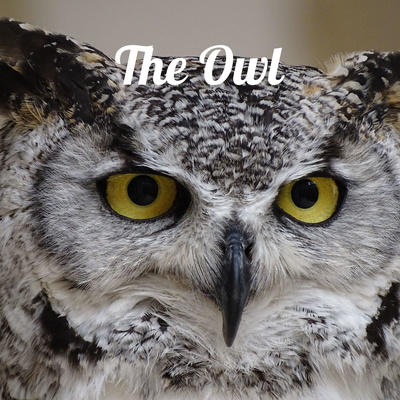 Inaugural Owl Podcast Published