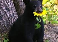 Bears, Oh My