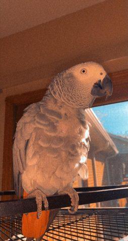 The Joy of Parrots